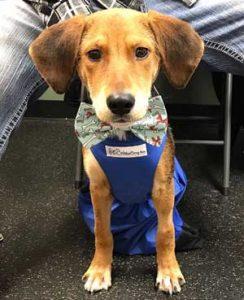 disabled-rescue-dog-in-drag-bag