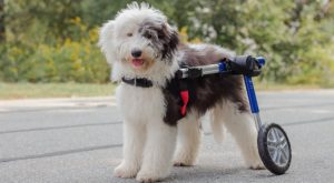 paralysis in dogs