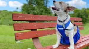 drag bag for paralyzed dog