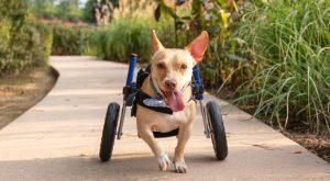 2022 Walkin' Pets Calendar cover dog