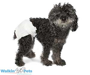 Peepers – Disposable Pet Diapers by Walkin Pets