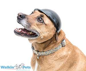 Walkin Dog Helmet