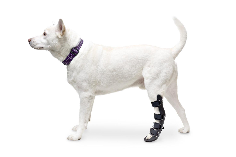 Image result for dog leg brace