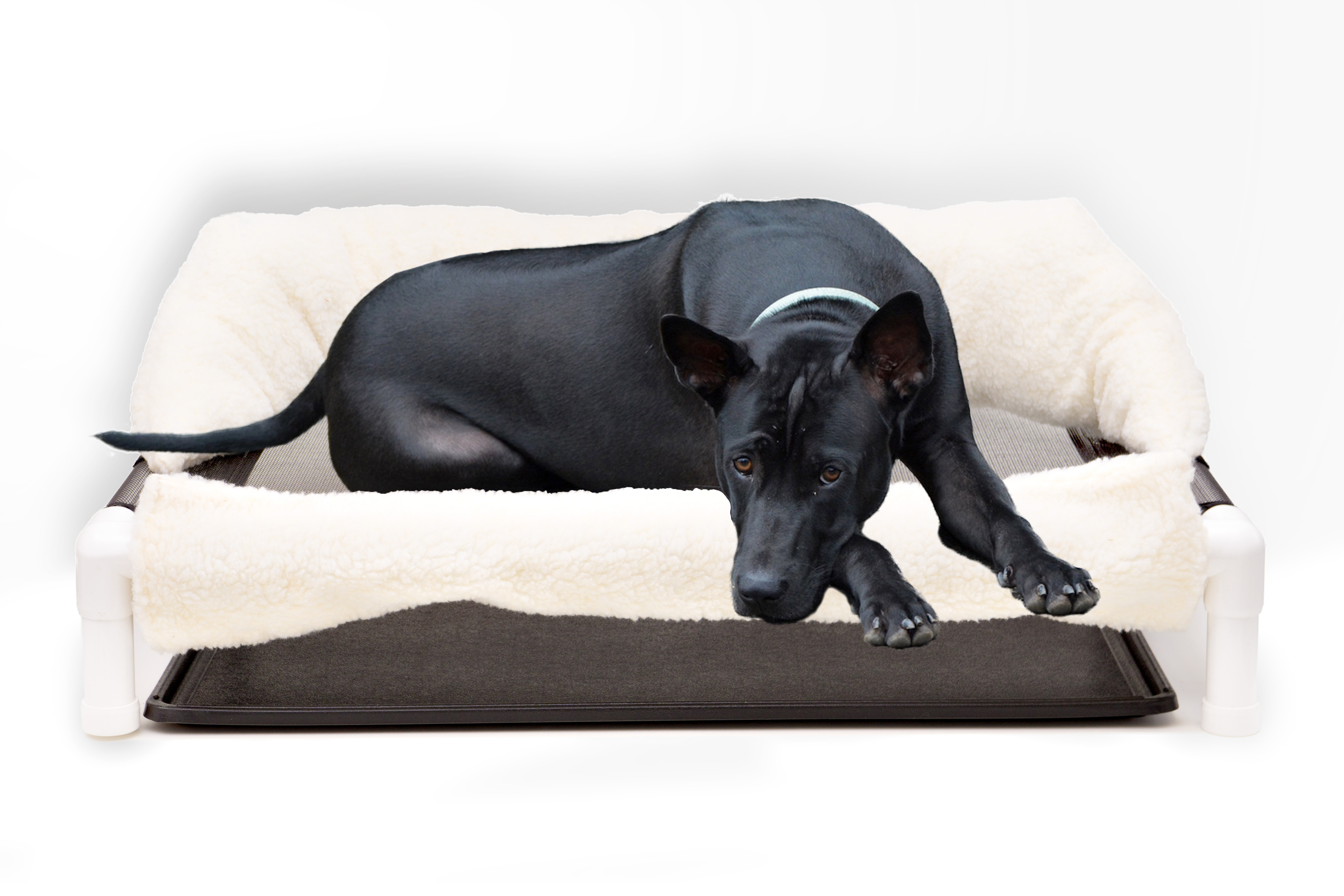 Elevated Bed for Incontinent Dogs and other Pets