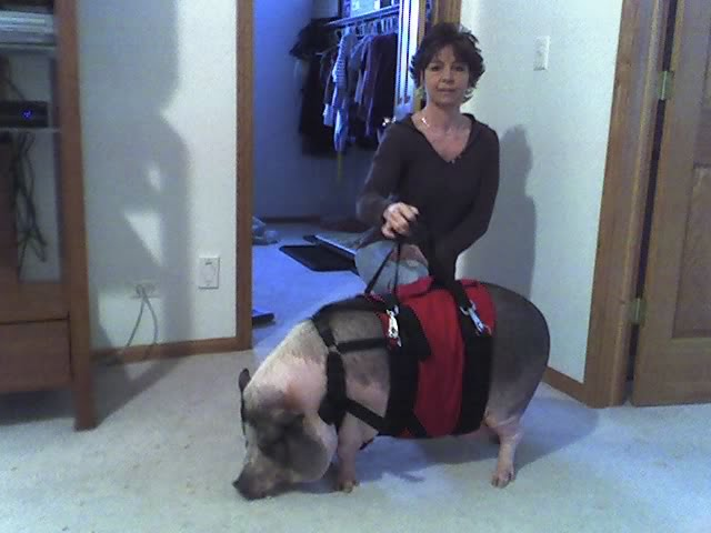 Support Harness for a Pig