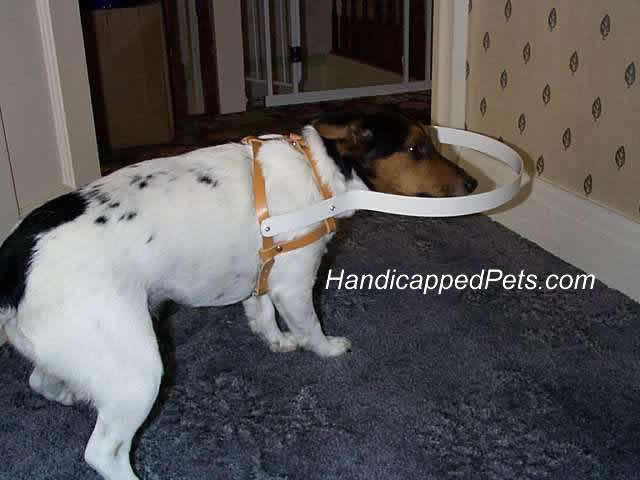 Handicapped Pets Blind Dogs Advice Products To Help Them