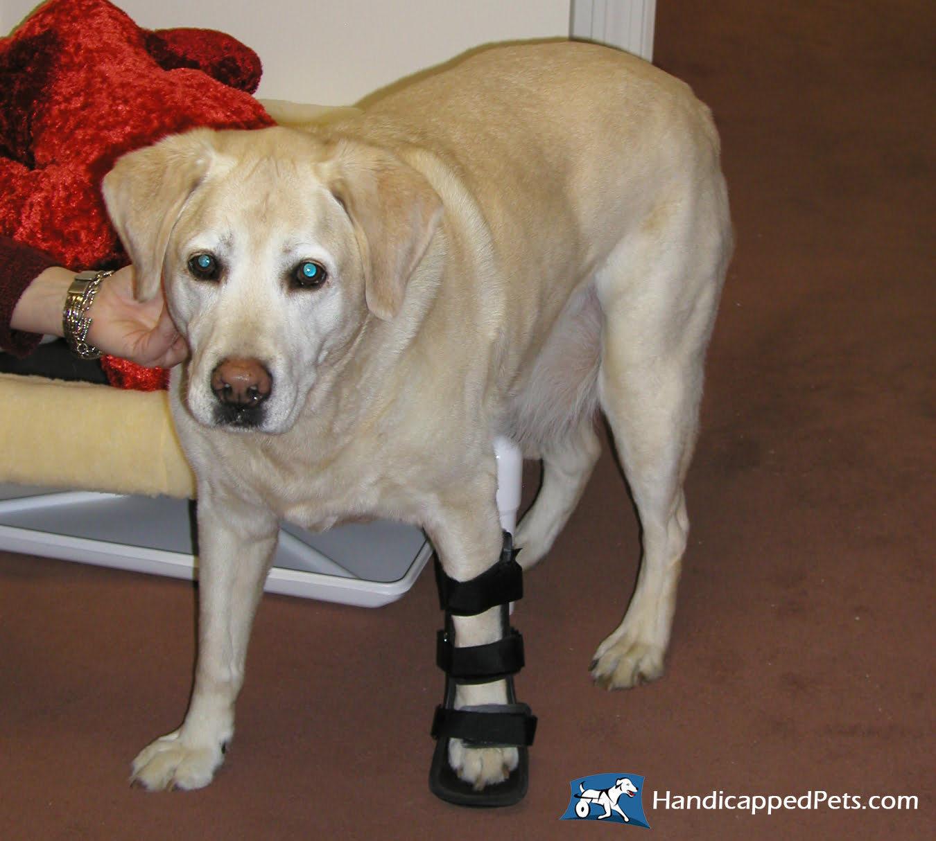 Dog Splints and Canine Dog Orthotic & Prosthetics