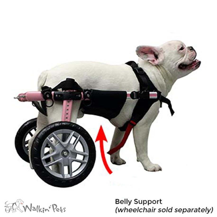 Walkin' Belly Support