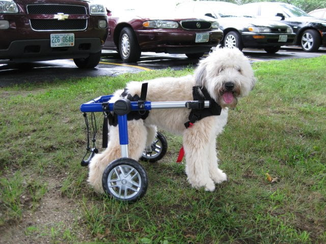 Find Used & Pre-Owned Dog Wheelchairs | HandicappedPets