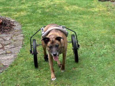 Diy Dog Wheelchair Homemade Dog Wheelchairs