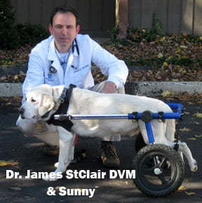 Veterinarian Approved Dog Wheelchair