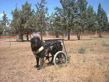 kid john dog in his cart