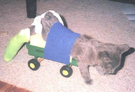 cat in a homemade wheelchair