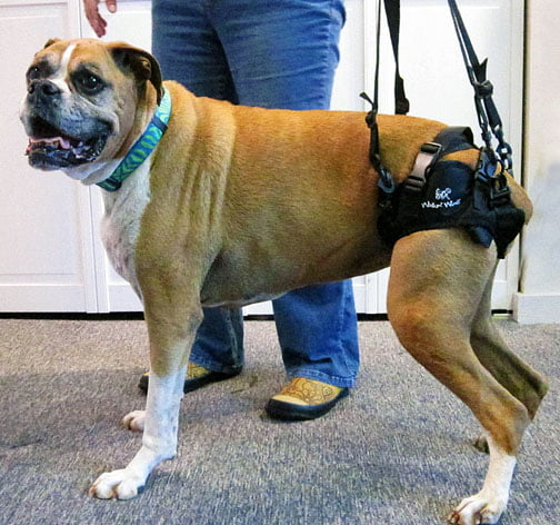Best Harnesses For Dog With Leg Problems