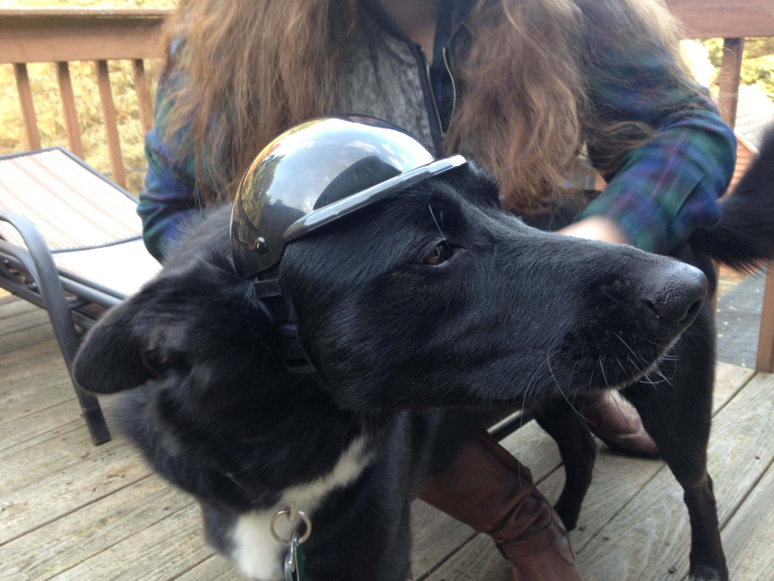 Dog Helmet Head Protection For Disable Dogs