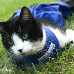 Leuitenant Dan from dangerdee09 Cat Drag Bag