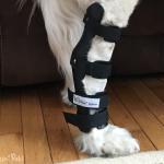 Maxie in Walkin' Hock Splint