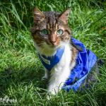 Cat in Walkin' Drag Bag
