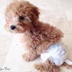 Diaper Wore by Coco
