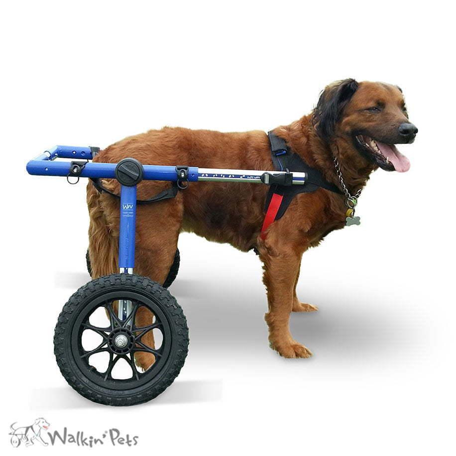 Walkin Wheels LARGE Dog Wheelchair