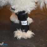 Roo in Rear No-Knuckling Training Sock
