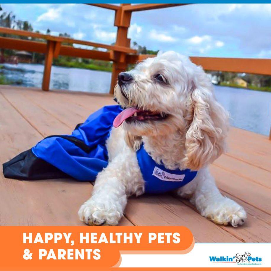 Drag Bag Walkin Drag Bag Dog Drag Bag Handicapped Pets
