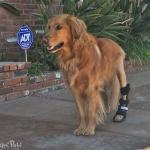 Molly in Walkin' Rear Splint