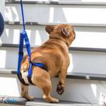 Walkin' Up-n-Go Leash