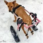 Esperanza in Walkin' Ski Attachment