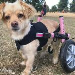 Coco in Front vest Wheelchair