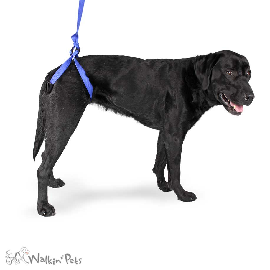 Rear Support Leash for Dogs | Dog Walking Aid | HandicappedPets