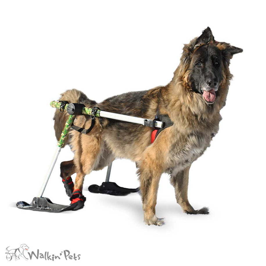 Skis for Walkin' Wheels Dog Wheelchair ...