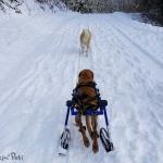 Thor in Walkin' Ski Attachment