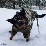 Tyson in the snow with Skis
