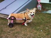 Mini Pink Dog Wheelchair