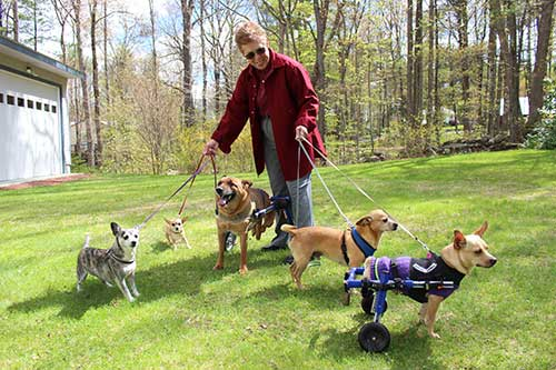 disabled dog rescue