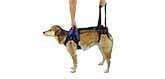 dog lifting harness