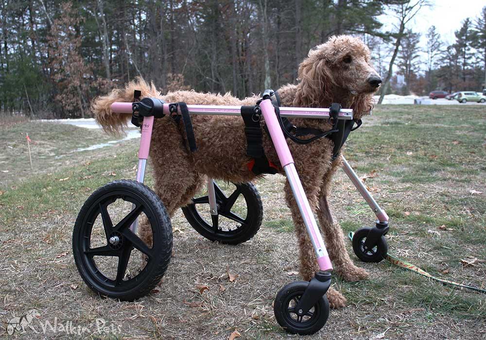 Full Support Medium Dog Wheelchairs Walkin Wheels