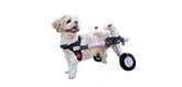 How to use a dog wheelchair