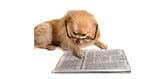 special needs dog news