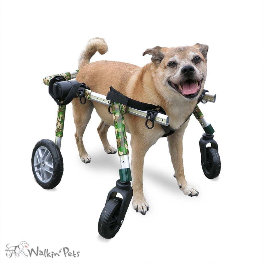Full Support Medium Dog Wheelchairs | Walkin' Wheels