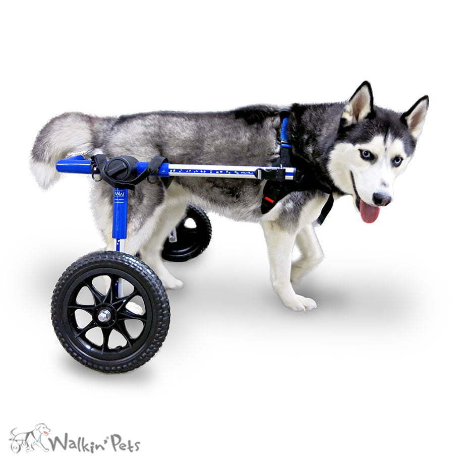 Products for Handicapped & Disabled Pets | Handicapped Pets