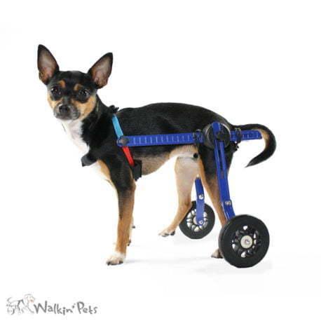 Leg Press For Sale >> Dog Wheelchair for Toy Breeds | Cat Wheelchair | Walkin' Wheels Mini