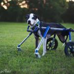 Reed in Medium Full Support / Quad Walkin' Wheels Wheelchair
