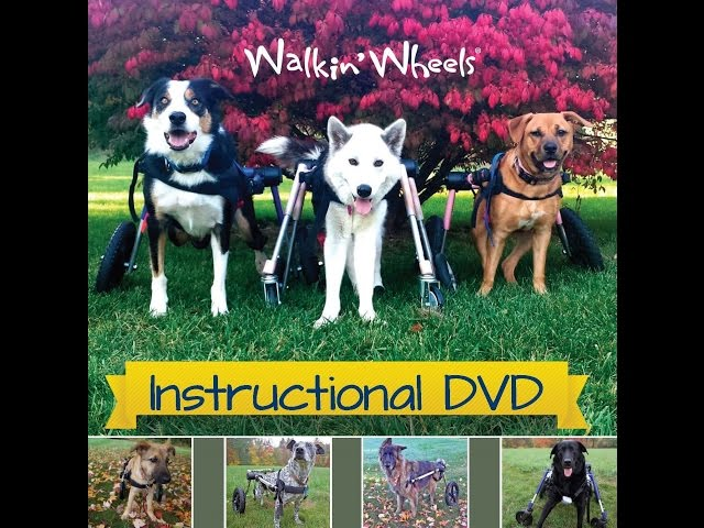 instructional videos small dog wheelchair handicapped pets