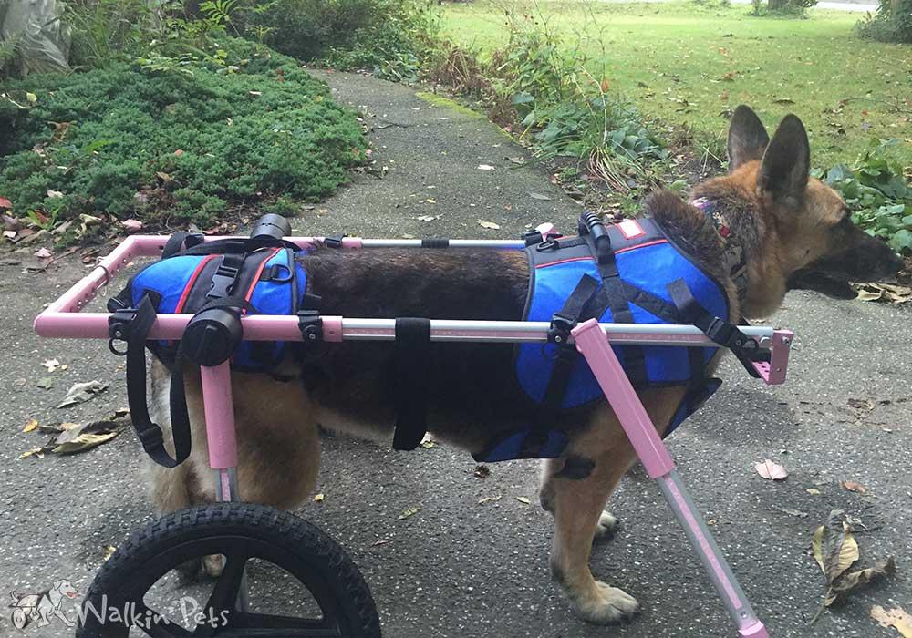 Full Support Large Dog Wheelchairs Walkin Wheels