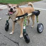 Bugsy Medium Full Support Walkin Wheels