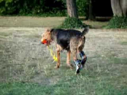 K9 Dog Orthotics Prosthetics Handicapped Pets