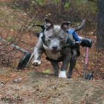 morag medium dog wheelchair review