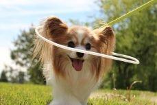 Hoop Harness For Blind Dogs Diy Blind Dog Hoop Harness